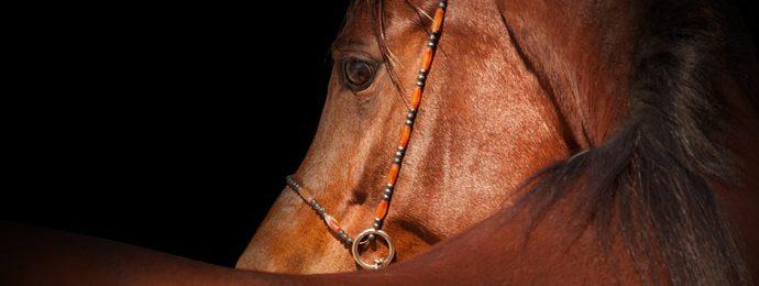 Hevosen EKG-tutkimus