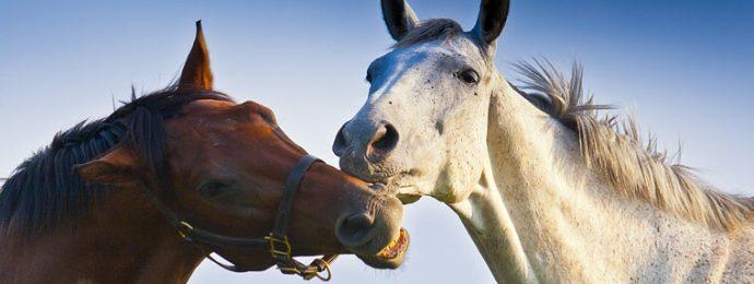 Hevosen peruselintoimintoja