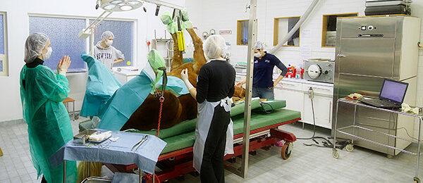 Leikkaustoimenpiteet