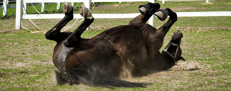 Hevosen ähky