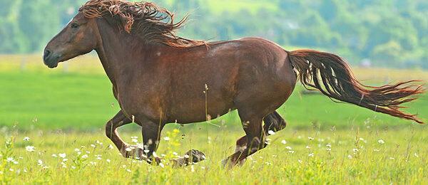 Irtopalat hevosilla