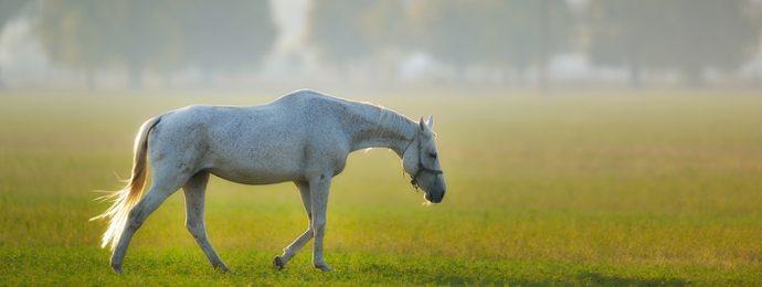 Hevosen kesäihottuma ja hoito
