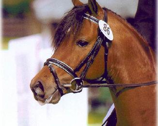 Ponin ja hevosen terveysilta 13.10.2016